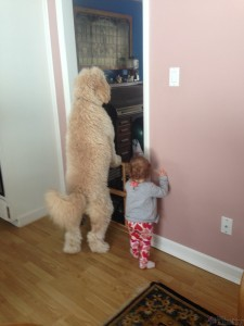 cocapoo and girl standing