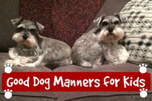 dog manners