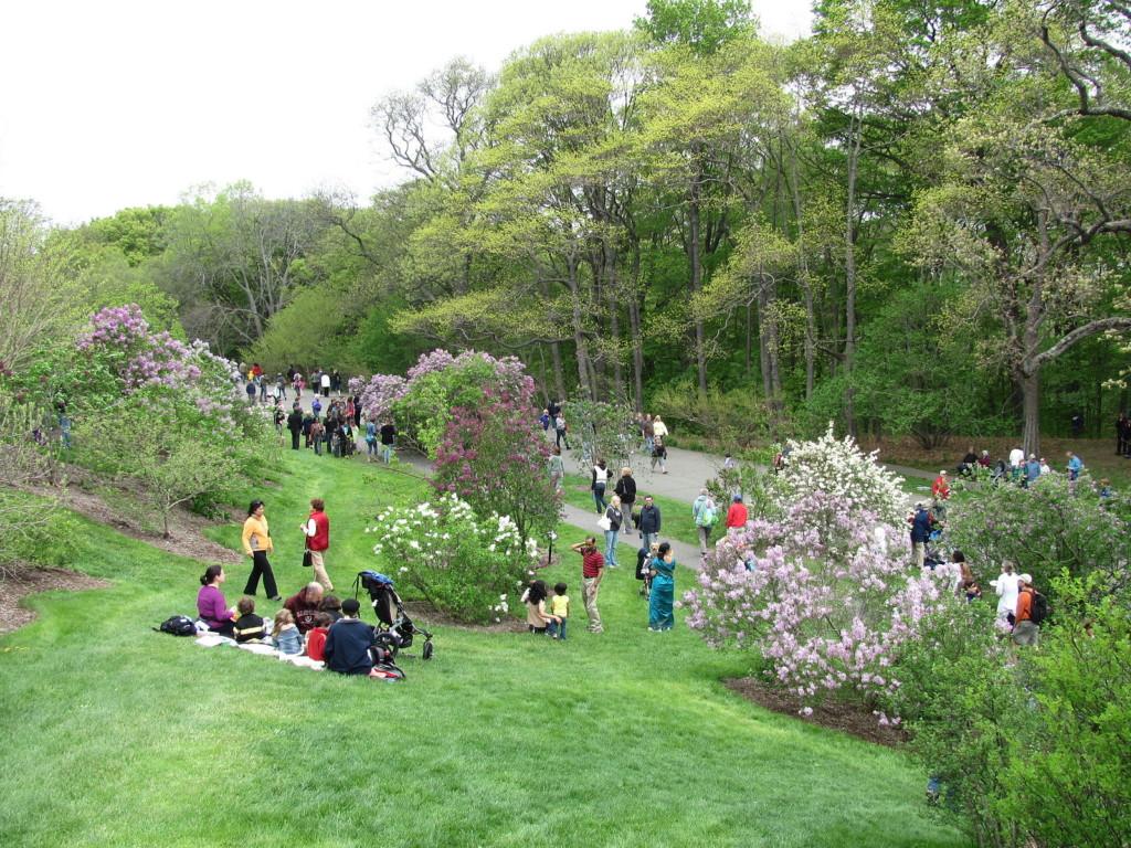 Lilac_Sunday,_Arnold_Arboretum,_Jamaica_Plain_MA
