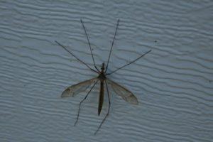 mosquito-26057_1280
