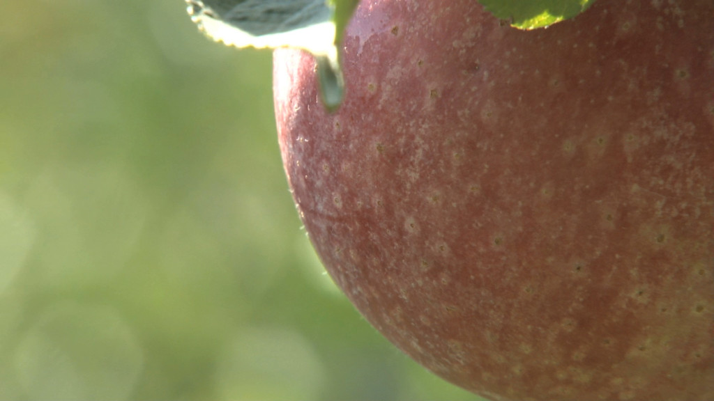 12 Orchards to Go Apple Picking Near Boston