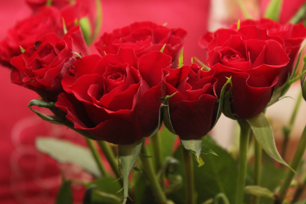 Valentine's Day ideas - Boston Moms Blog