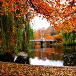 Looking Forward to Fall in Boston