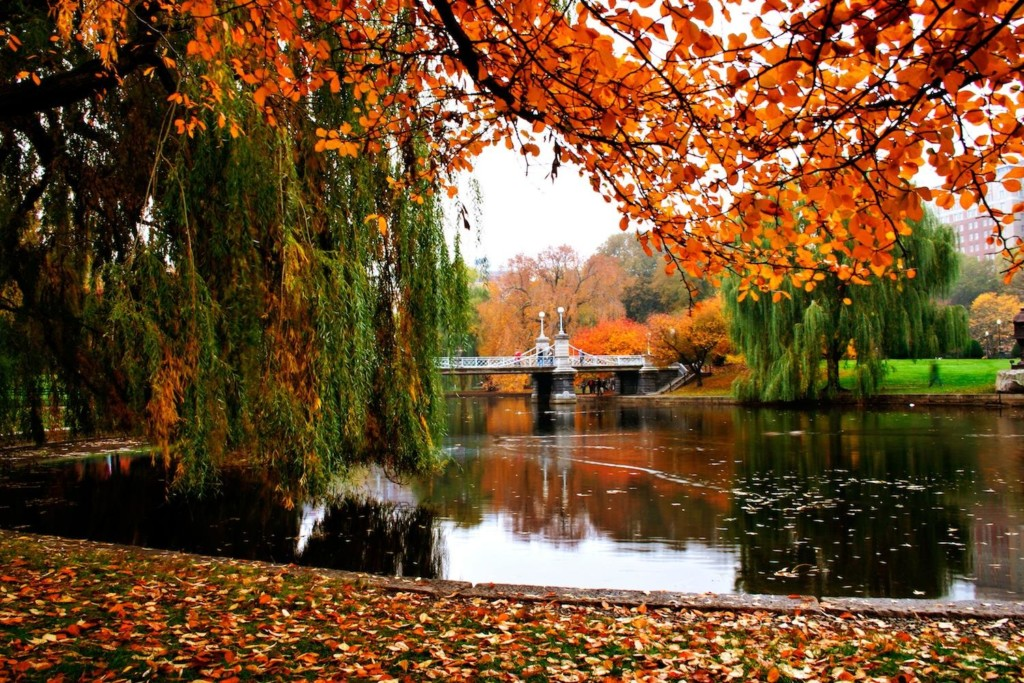 fall in Boston - Boston Moms Blog