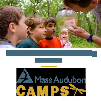 mass audubon wild at art summer camp - boston moms blog camp guide