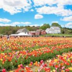 15 Boston-Area Flower Farms You'll Want To Check Out This Spring