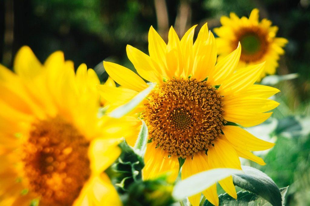flower farms - Boston Moms Blog