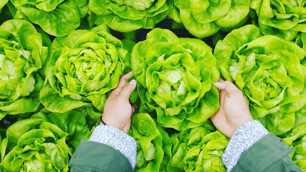 veggies - Boston Moms Blog