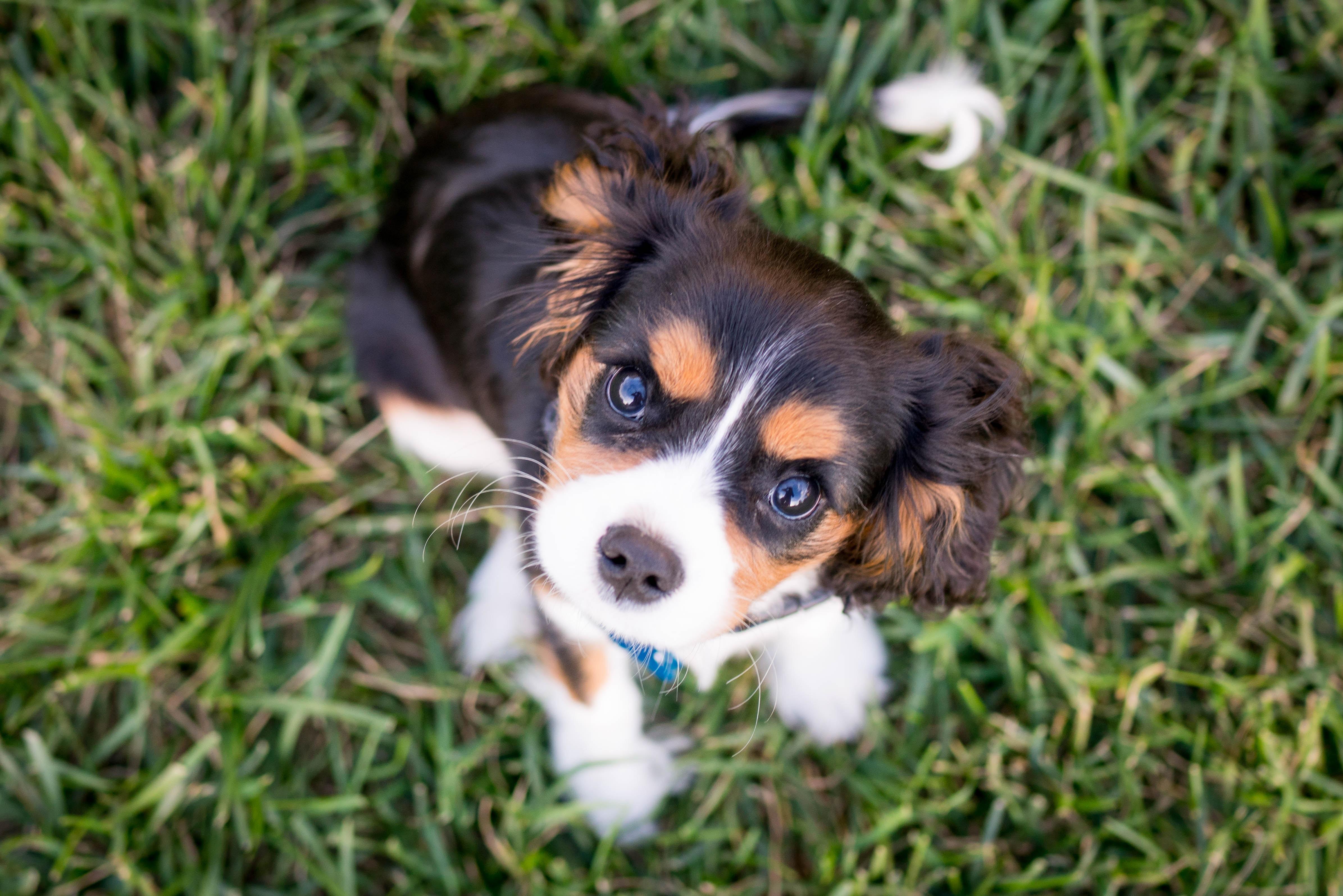 getting a puppy - Boston Moms Blog