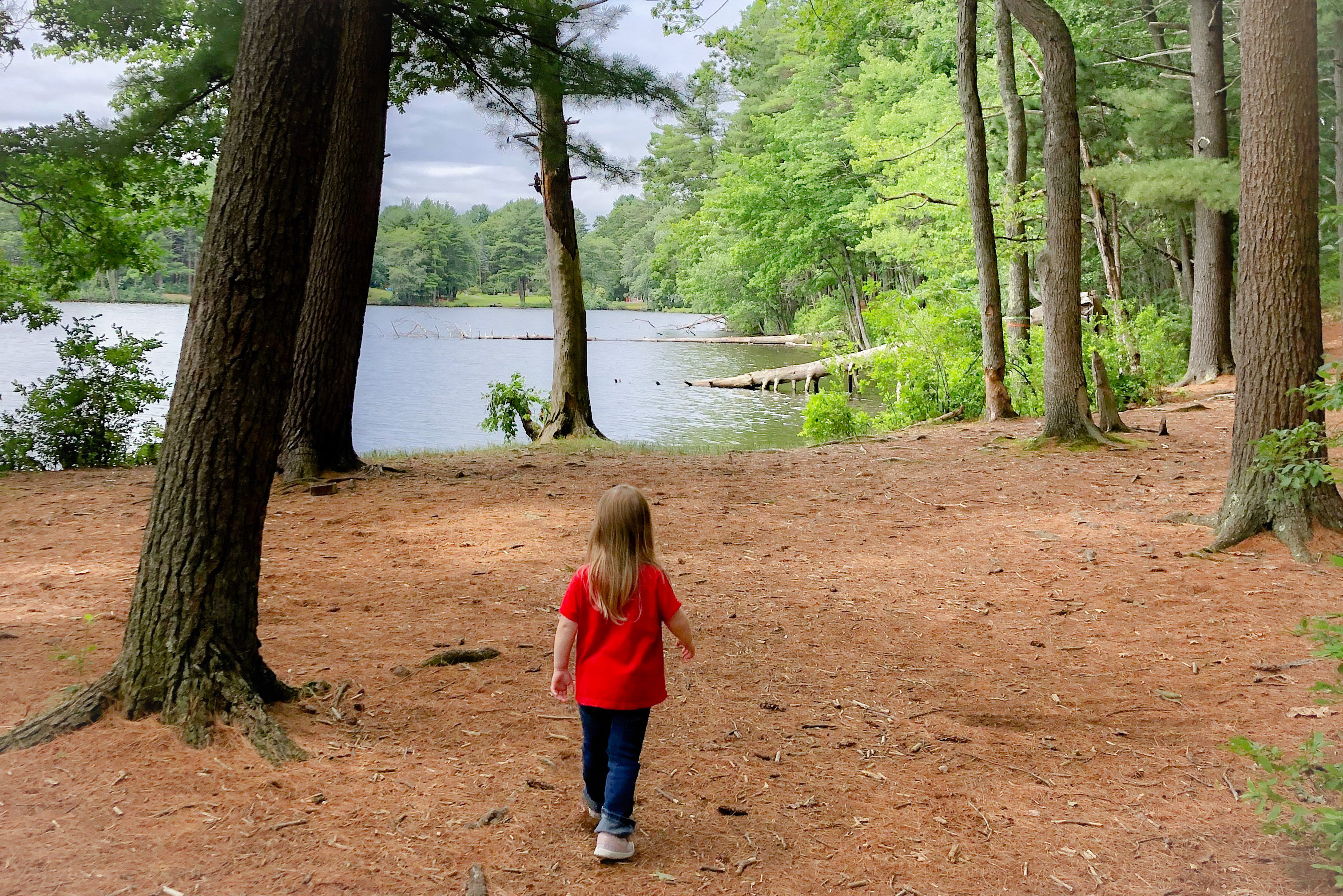 nature woods - Boston Moms Blog