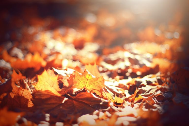 When Thanksgiving Is Hard :: Gratitude in a Difficult Season