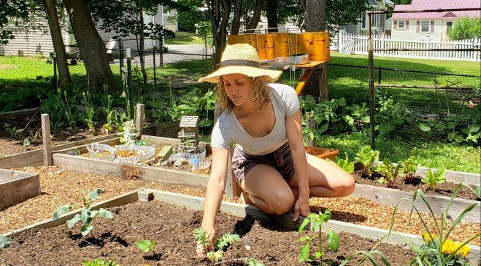 gardening - Boston Moms