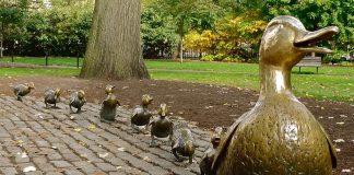 Boston Public Garden ducklings - Boston Moms