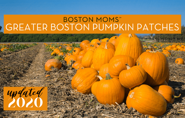 Boston pumpkin patches - Boston Moms