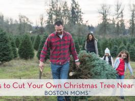 18 Farms to Cut Your Own Christmas Tree Near Boston!