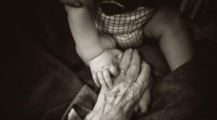 family tree - Boston Moms